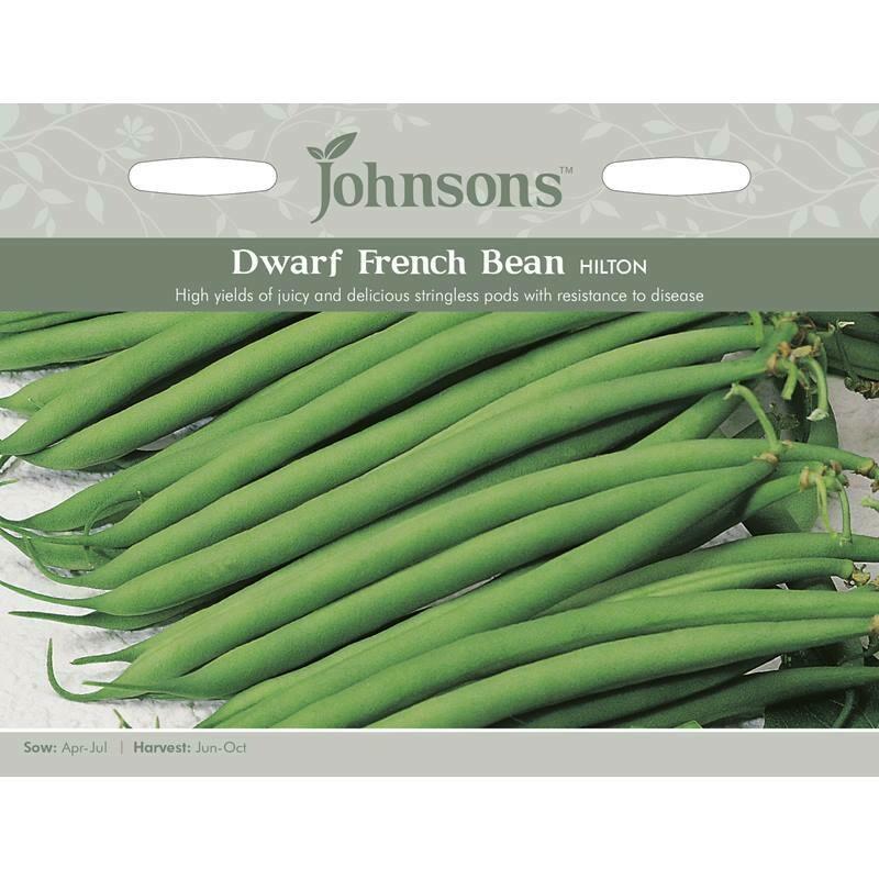 Dwarf French Bean Hilton