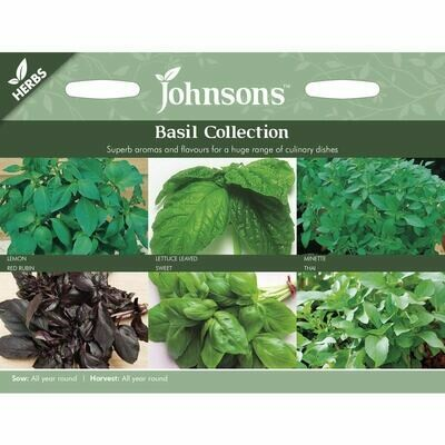 Herb - Basil Collection