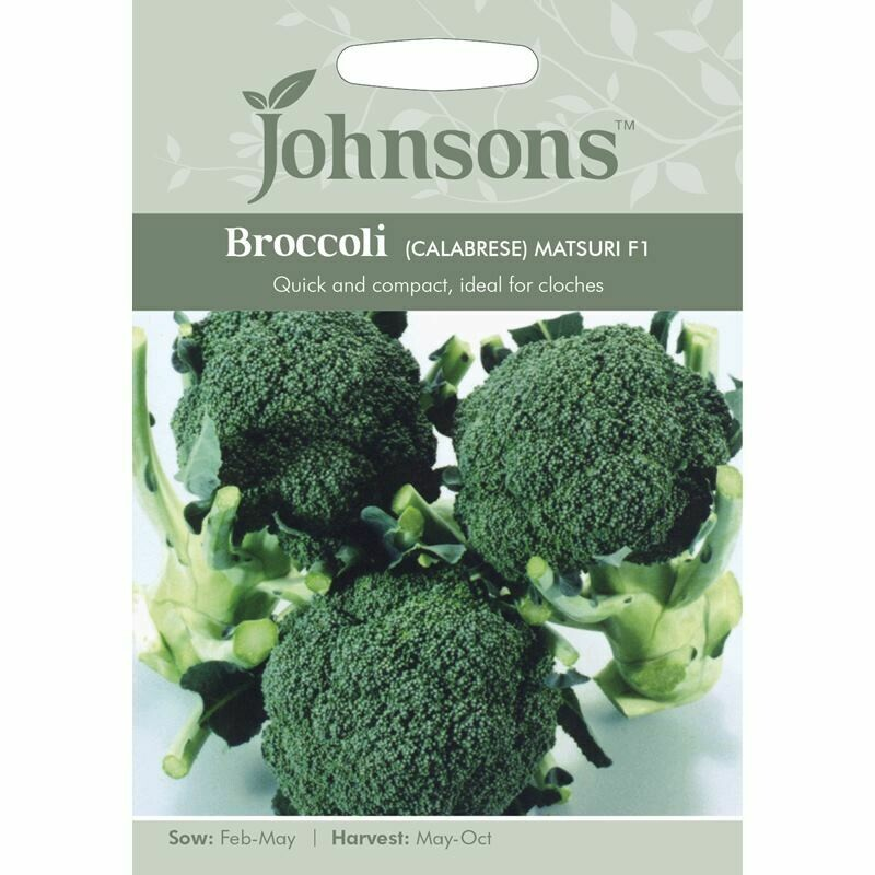 Broccoli (Calabrese) Matsuri F1