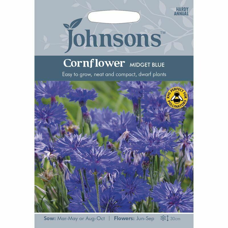 Cornflower Midget Blue