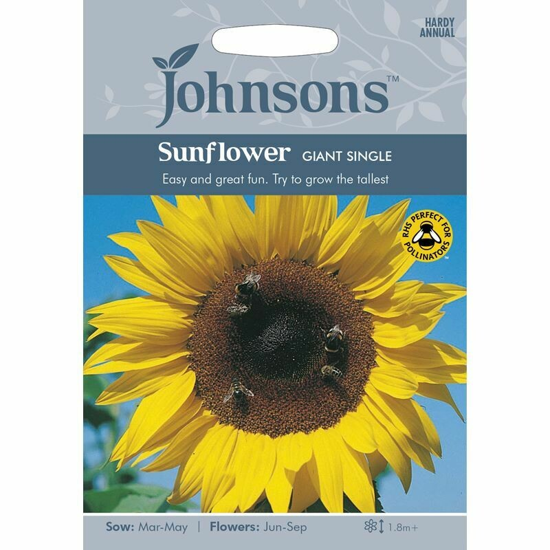Sunflower Giant Single