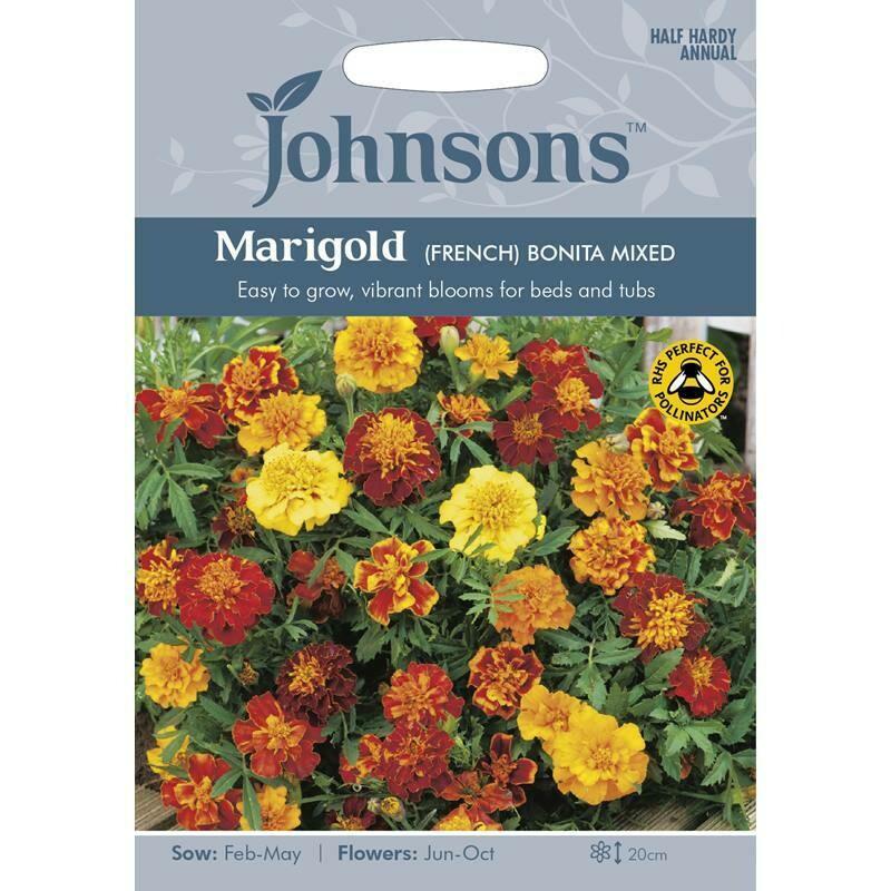 Marigold (French) Bonita Mixed