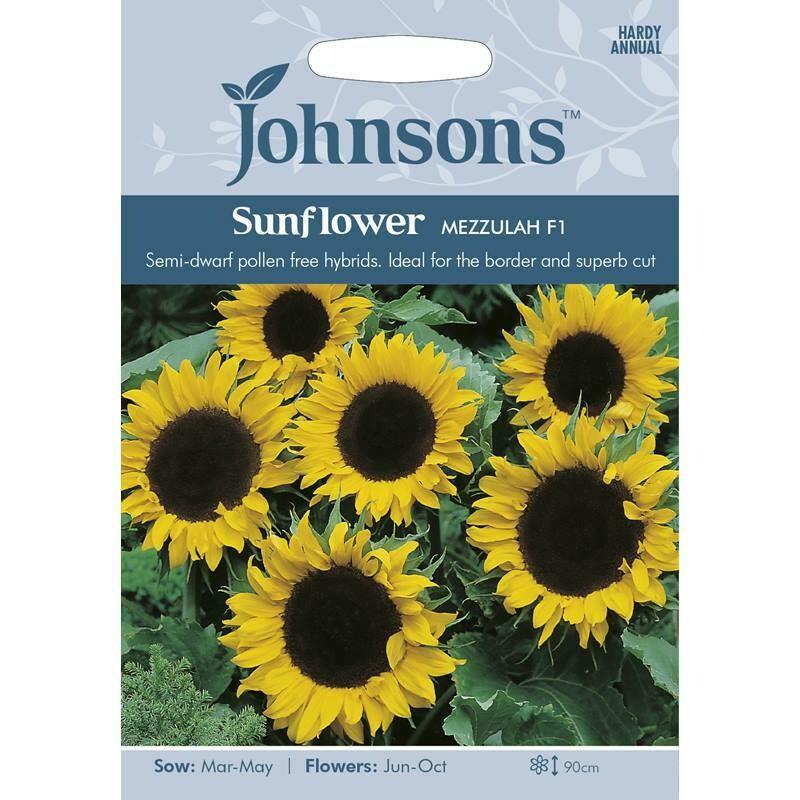 Sunflower Mezzulah F1