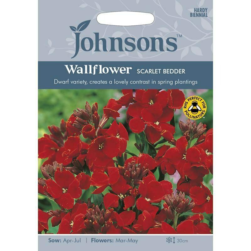 Wallflower Scarlet Bedder