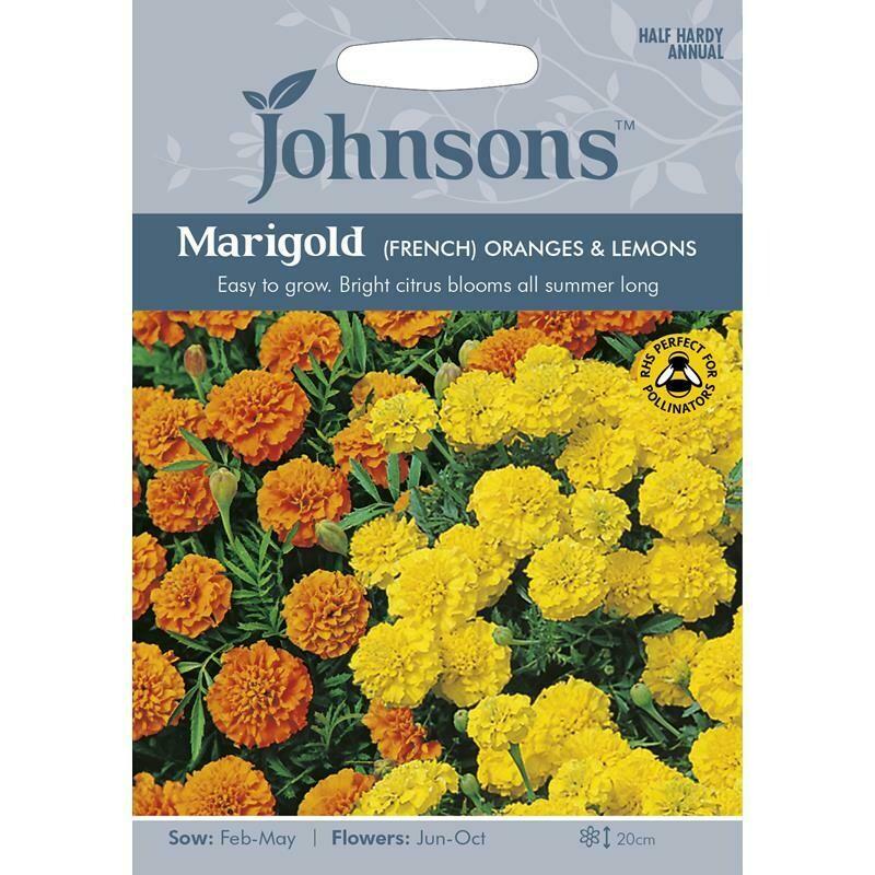 Marigold (French) Oranges & Lemons