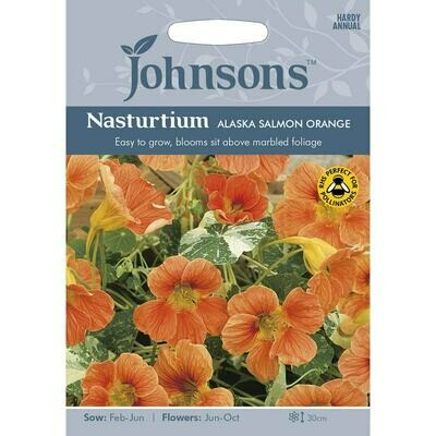 Nasturtium Alaska Salmon Orange
