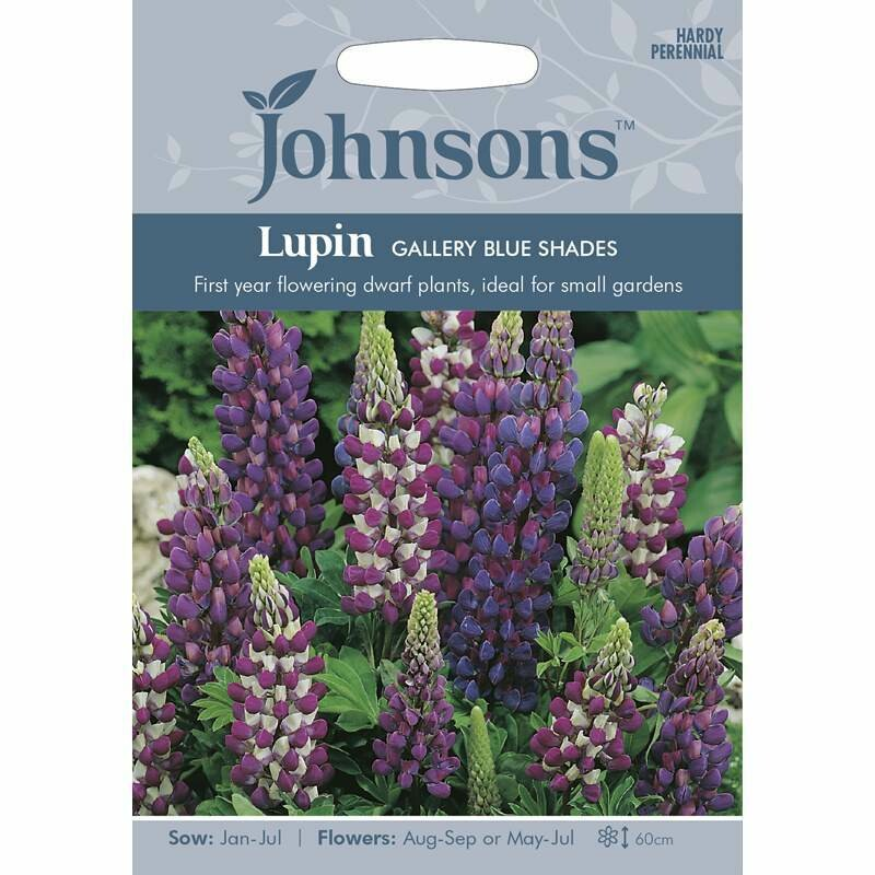 Lupin Gallery Blue Shades