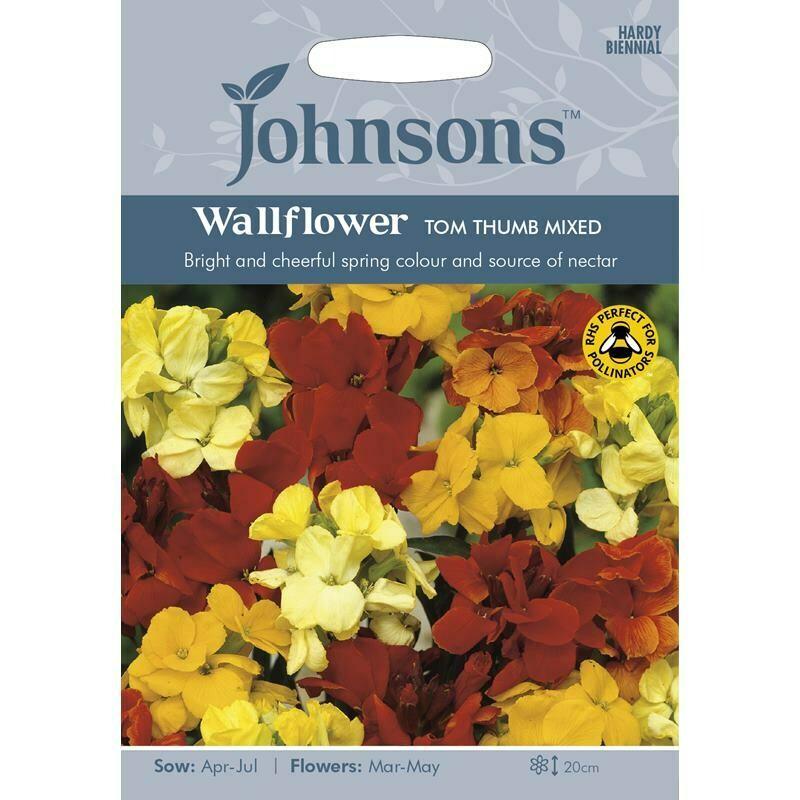 Wallflower Tom Thumb Mixed