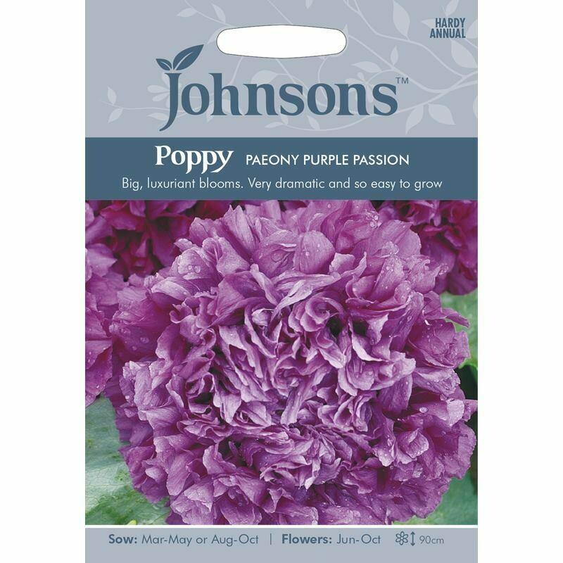 Poppy Paeony Purple Passion