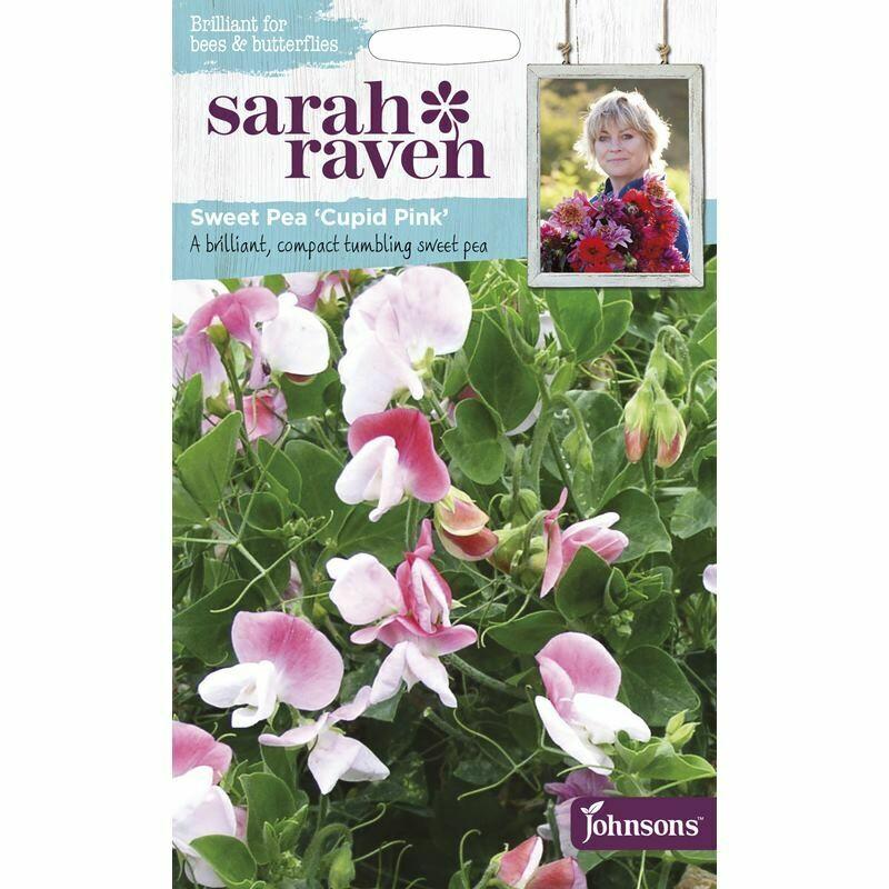 Sarah Raven Sweet Pea Cupid Pink
