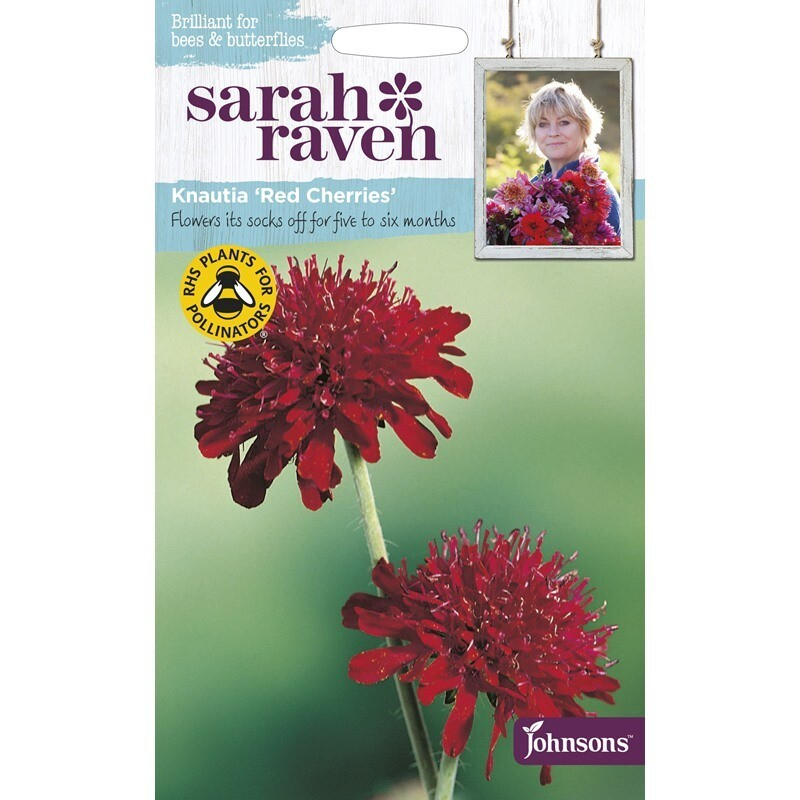 Sarah Raven Knautia Red Cherries