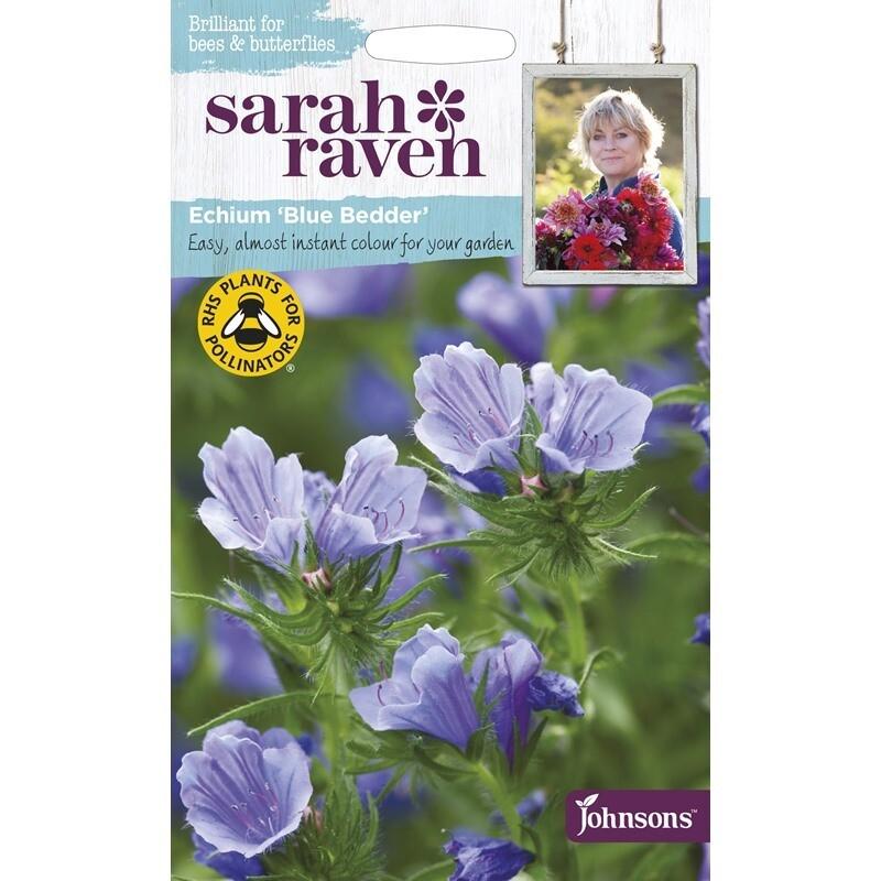 Sarah Raven Echium Blue Bedder