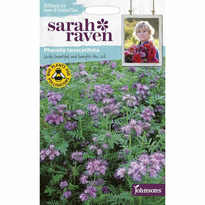 Sarah Raven Phacelia Tanacetifolia
