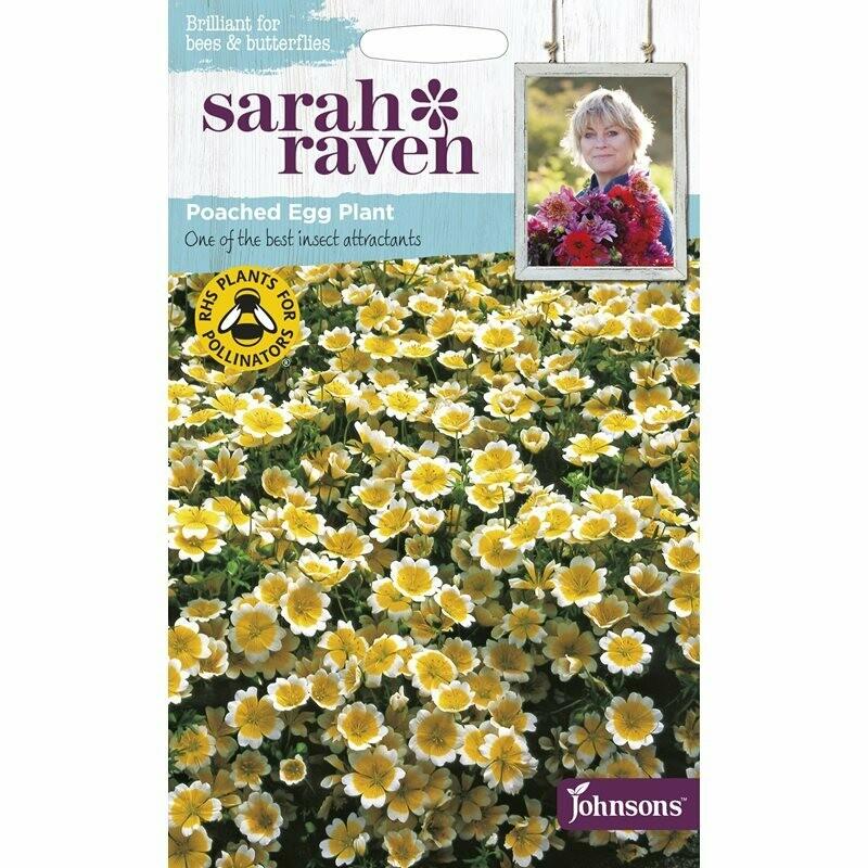 Sarah Raven Poached Egg Plant