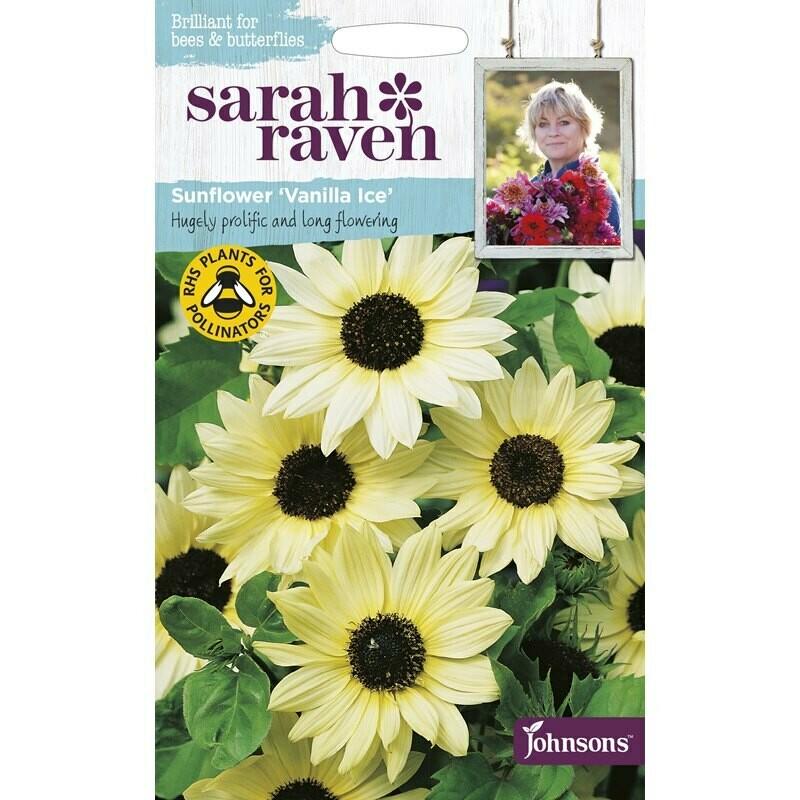 Sarah Raven Sunflower Vanilla Ice