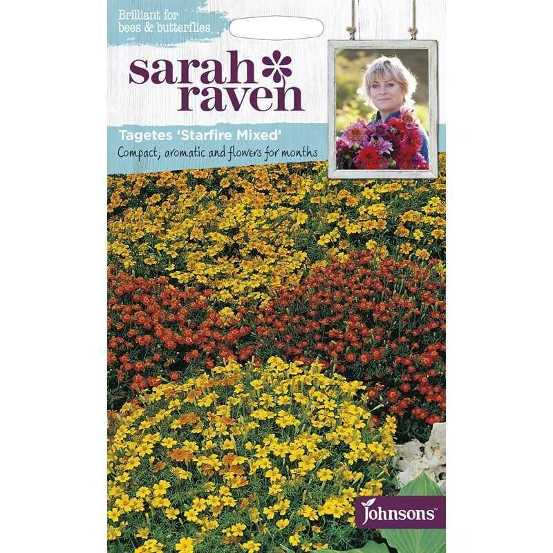 Sarah Raven Tagetes Starfire Mixed