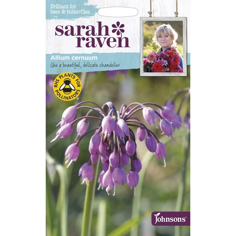 Sarah Raven Allium Cemuum