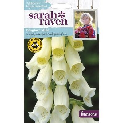 Sarah Raven Foxglove Alba
