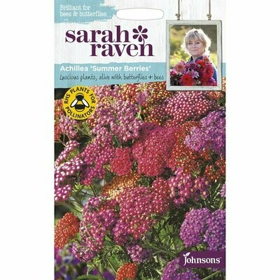 Sarah Raven Achillea Summer Berries