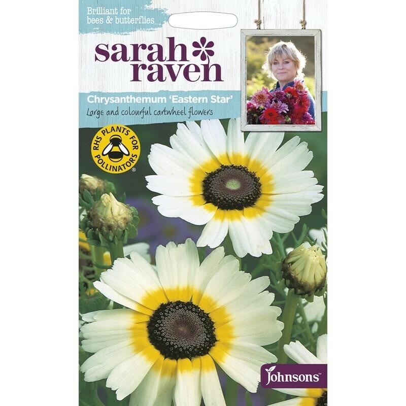 Sarah Raven Chrysanthemum Eastern Star
