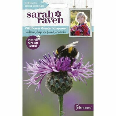 Sarah Raven Greater Knapweed