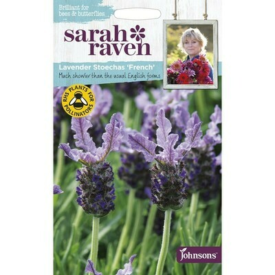 Sarah Raven Lavender Stoechas French
