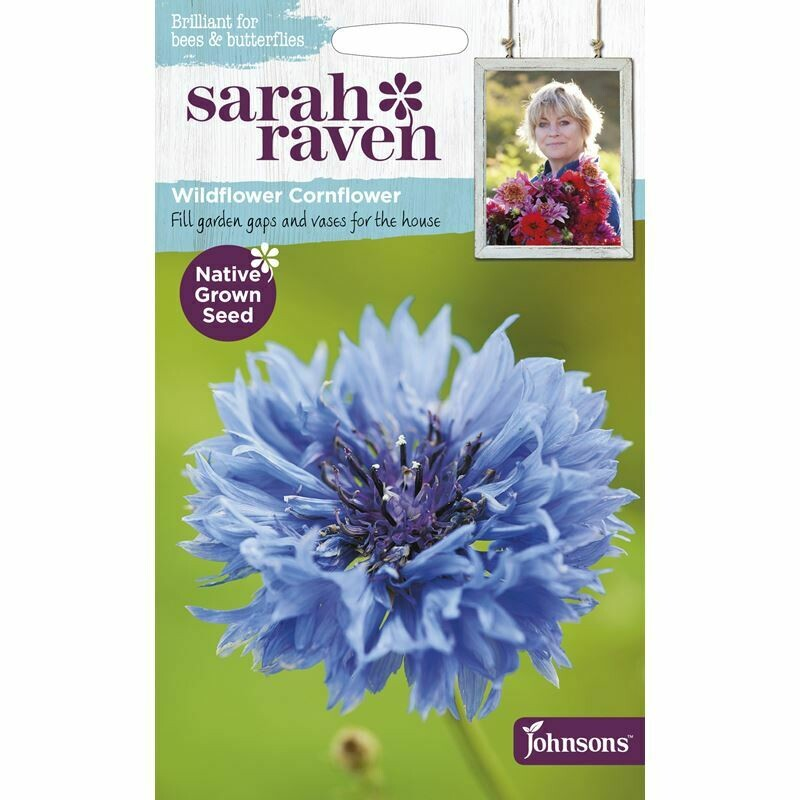 Sarah Raven Cornflower