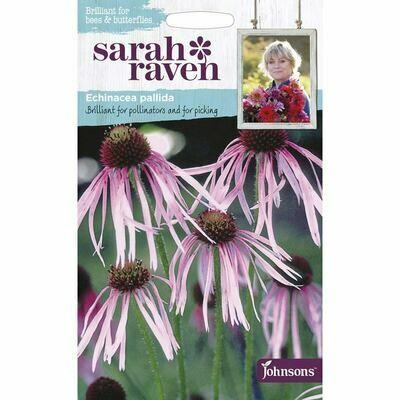 Sarah Raven Echinacea Pallida