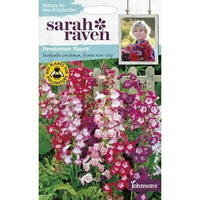 Sarah Raven Penstemon Esprit