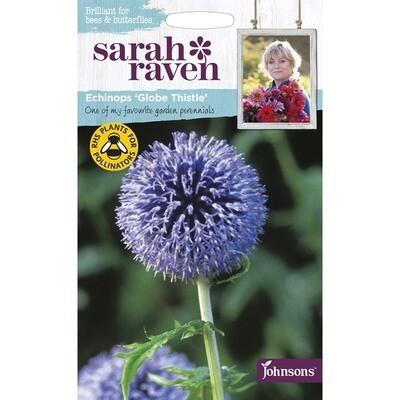 Sarah Raven Echinops Globe Thistle