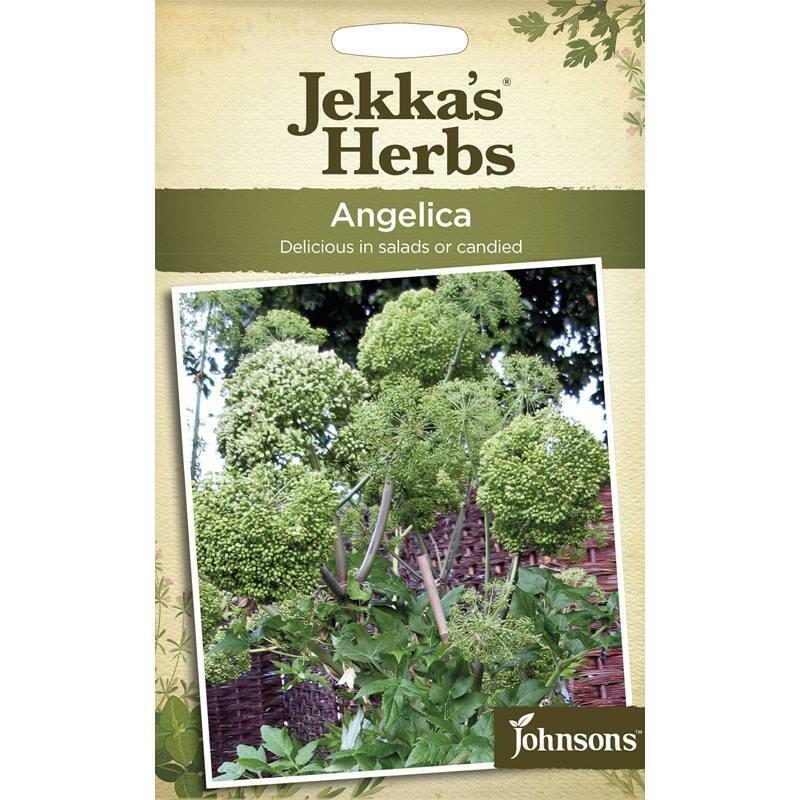 Jekka Herbs Angelica