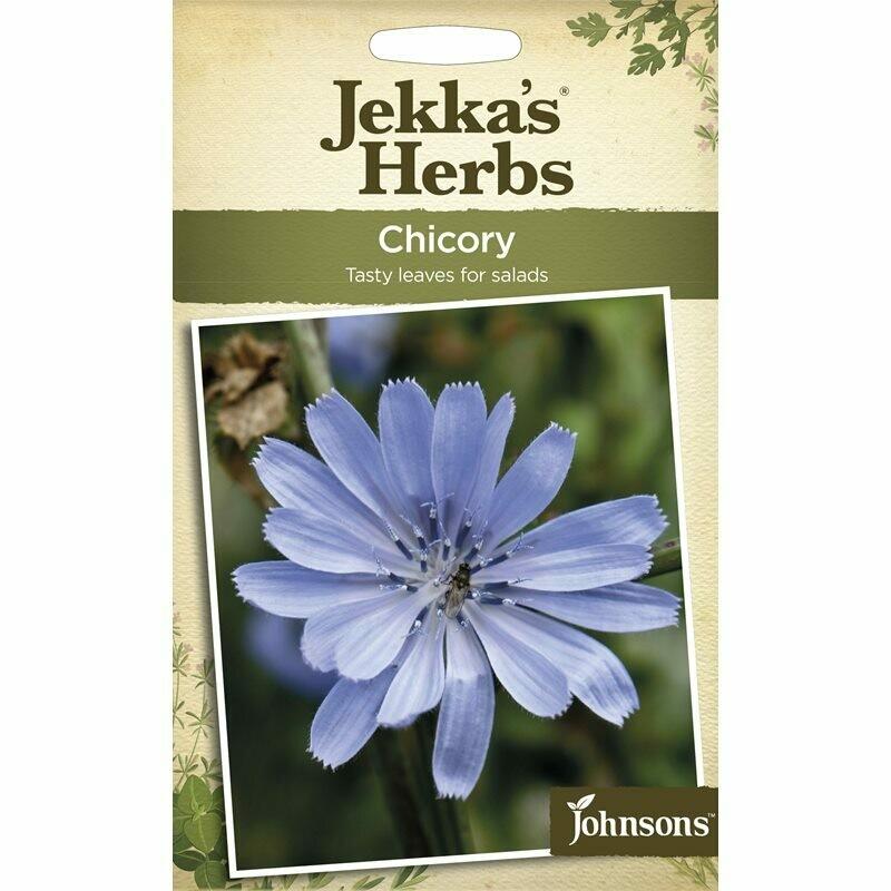 Jekka Herbs Chicory