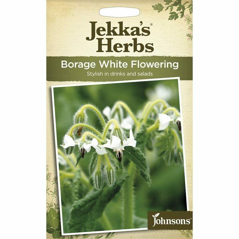Jekka Herbs Borage White Flowering