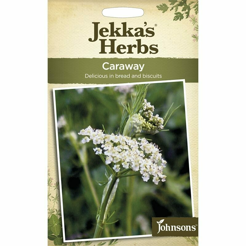 Jekka Herbs Caraway
