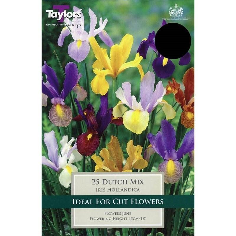 Iris Dutch Mixed x25