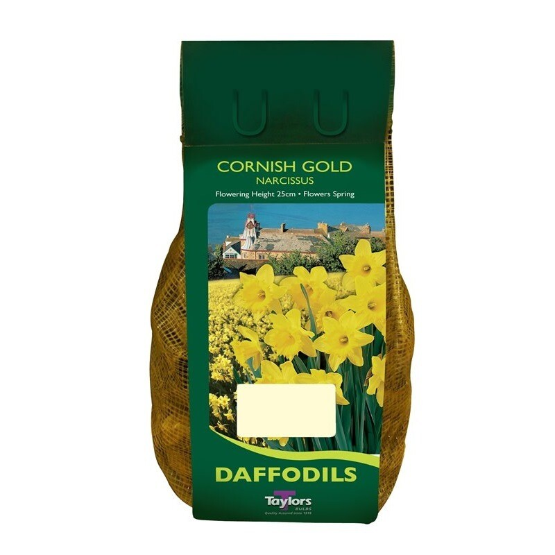 Daffodil Cornish Gold  x2kg
