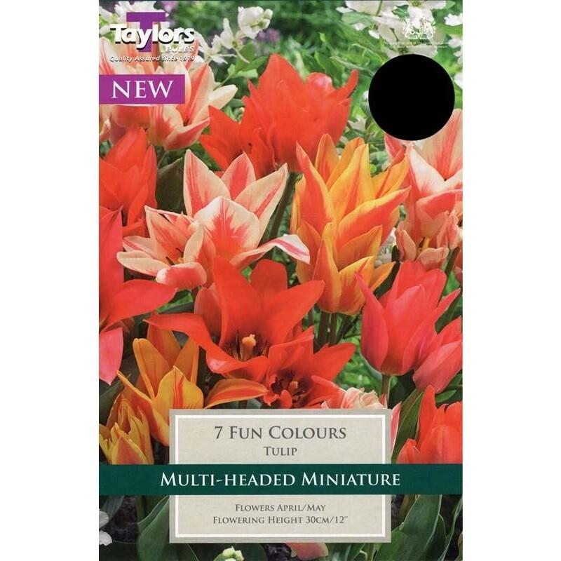 Tulip Fun Colours x7