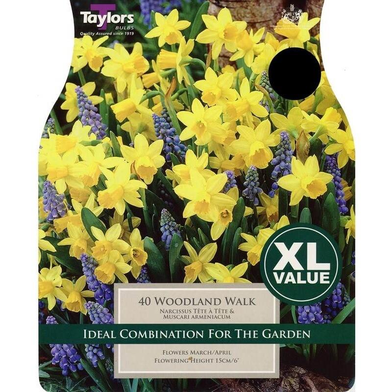 Value Woodland Walk x40