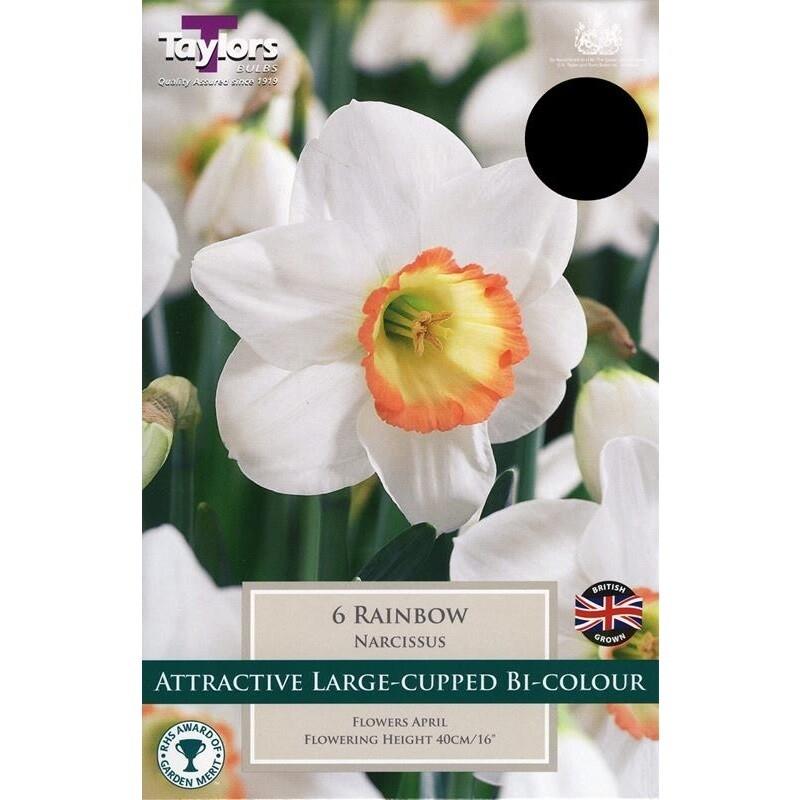 Daffodil Rainbow x6
