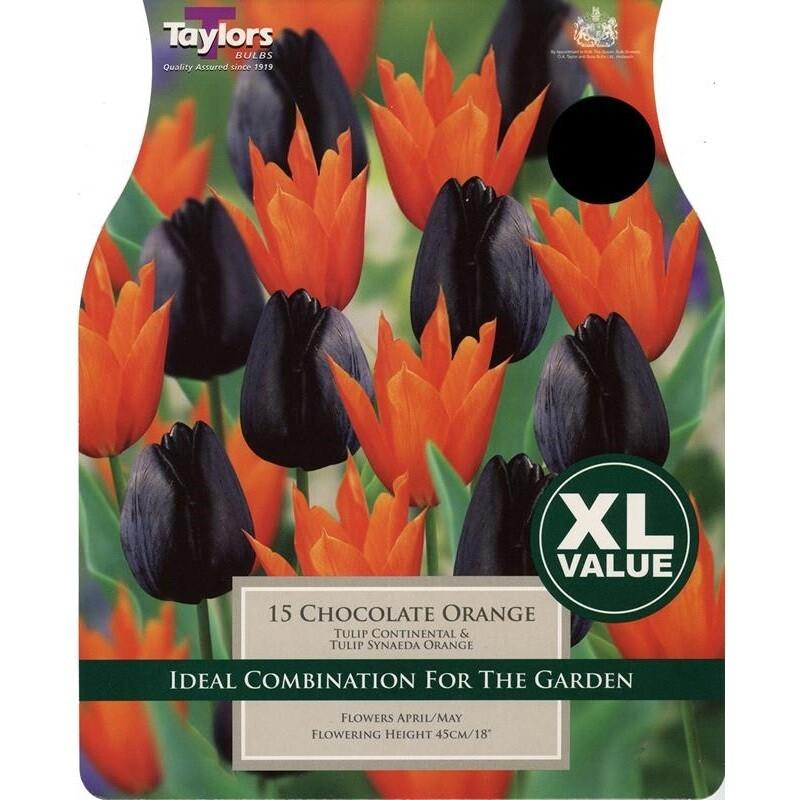 Value Tulip Chocolate Orange x15