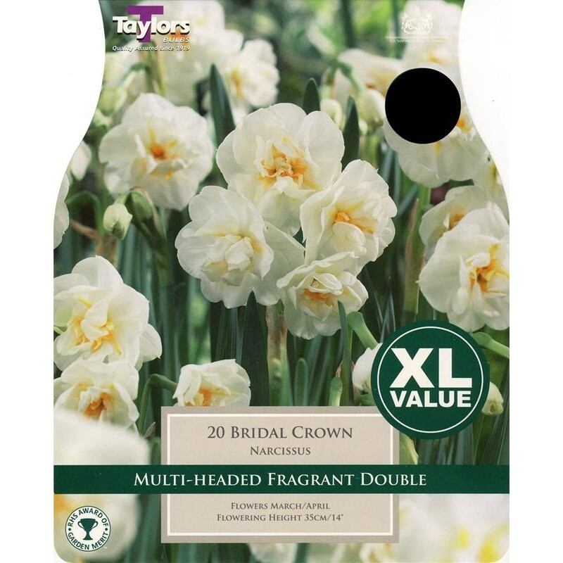 Value Narcissi Bridal Crown x20