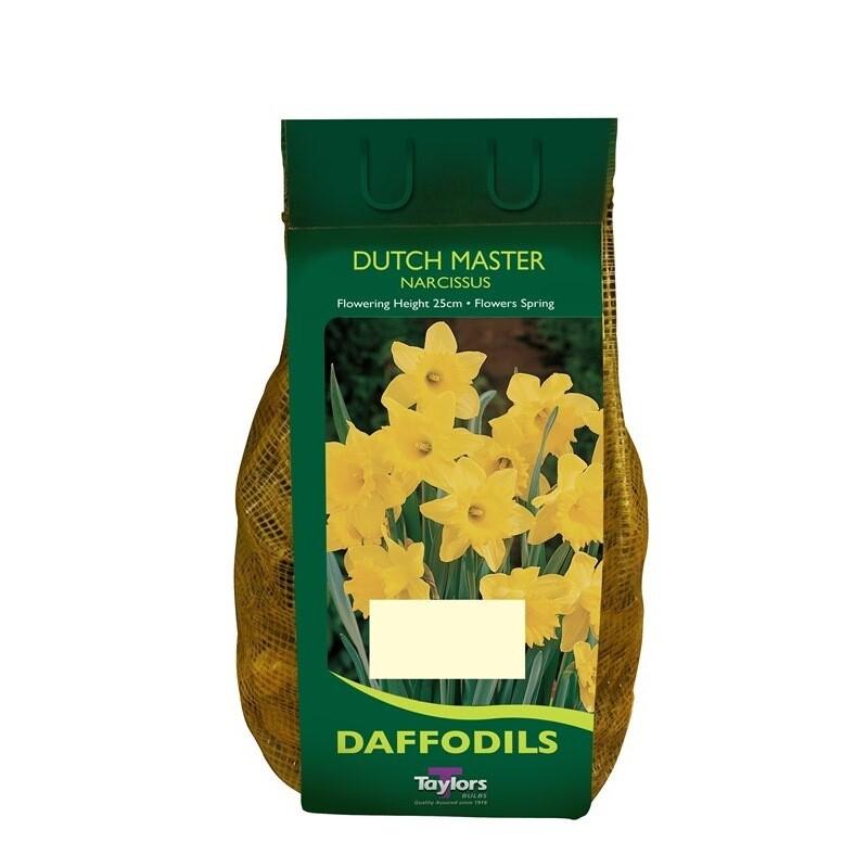 Daffodil Dutch Master  x2kg