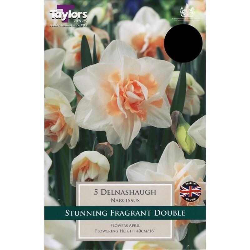 Daffodil Delnashaugh x5