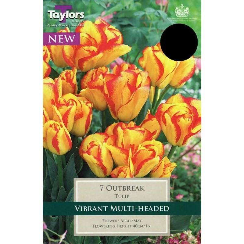 Tulip Outbreak x7