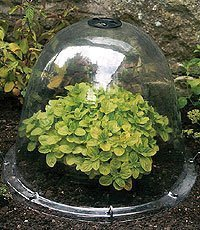 Haxnicks Pack of 3 Original Victorian Bell Garden Cloches