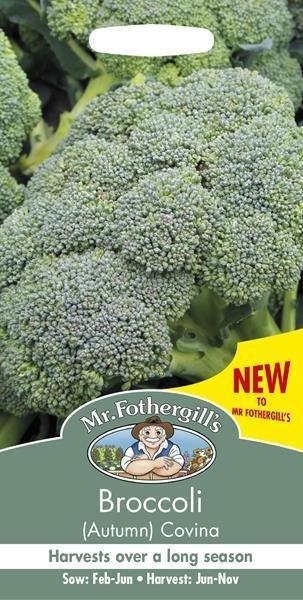 Broccoli (Autumn) Covina