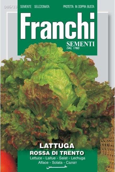 Lettuce Rossa Of Trento