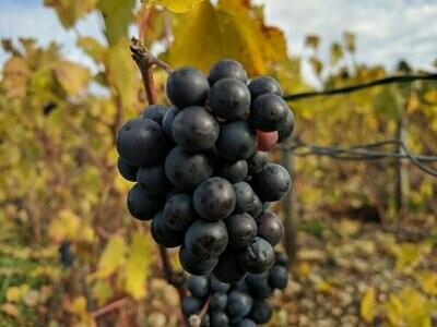 Vin Rosé des Riceys 2017