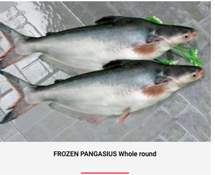 FROZEN PANGASIUS WHOLE ROUND / HEAD-OFF