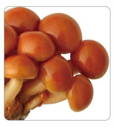 Nameko Agar Culture (petri dish)